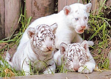 http://images.unian.net/photos/2007_02/1171277412.jpg