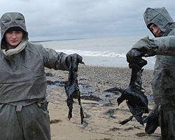 Сотрудники службы МЧС проводят работу по утилизации погибшей в результате загрязнения моря мазутом птицы в районе косы Тузла. Крым, 13 ноября