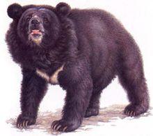 Медведя пришлось застрелить
