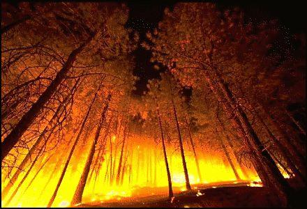 Пожар в Ялтинском заповеднике разрастается