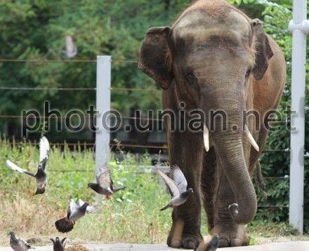 Новый киевский слон проживет в одиночестве минимум год