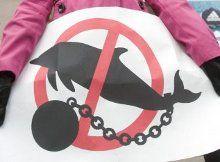 Плакат на акции протеста против строительства океанариума возле КГГА