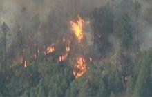 Пожежа, ліс