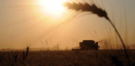 Задержка ярового сева приведет к сокращению урожая зерновых на 15-18%