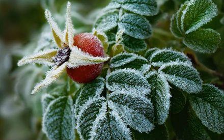 Осень, заморозки. Фото gorod48.ru