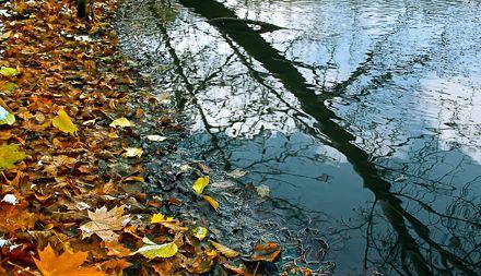 """Результат пошуку зображень за запитом """"дощова осінь"""""""