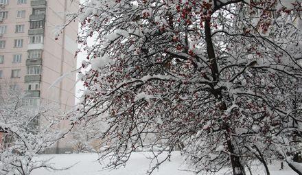 Завтра в Киеве будет идти снег. Фото Натальи Негрей