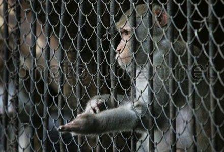 Животные в зоопарке остались без корма