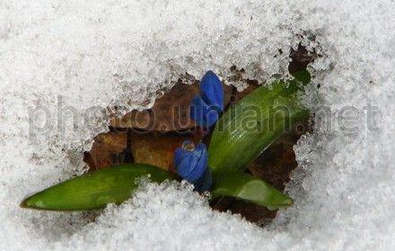Завтра на півдні та на крайньому заході України очікується до 10° тепла