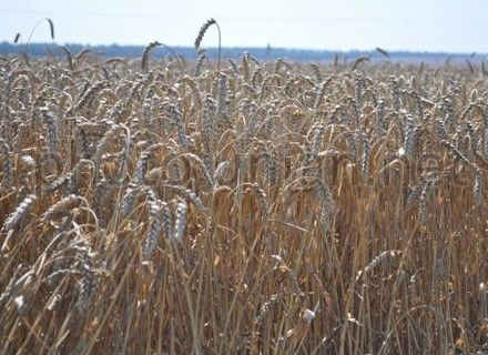 Объемы продажи продукции украинских аграриев должны вырасти на 25%
