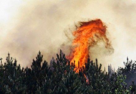 Окурок вызвал лесной пожар / Фото : Ian Emery