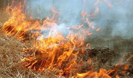 Укргидрометценетр предупреждает о возможности пожаров / Фото: vedamost.info