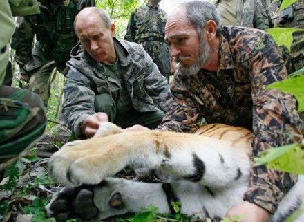 29 июля во всём мире отмечают Международный день тигра / Фото: mger2020.ru