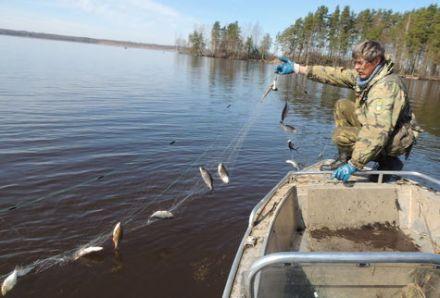 Инспектора Рыбоохраны пострадали из-за бракоьерских сетей, nn.mk.ru