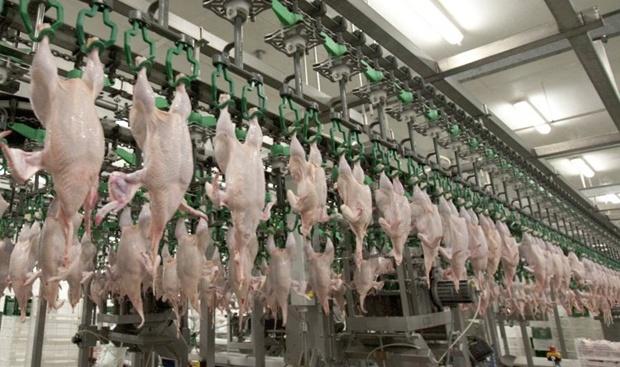 Украина увеличила производство мяса птицы и свинины, сократила – говядины
