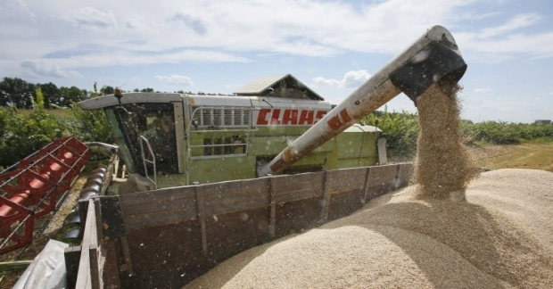 Ежегодно поборы за получение сертификата качества зерна составляют около 1 млрд грн