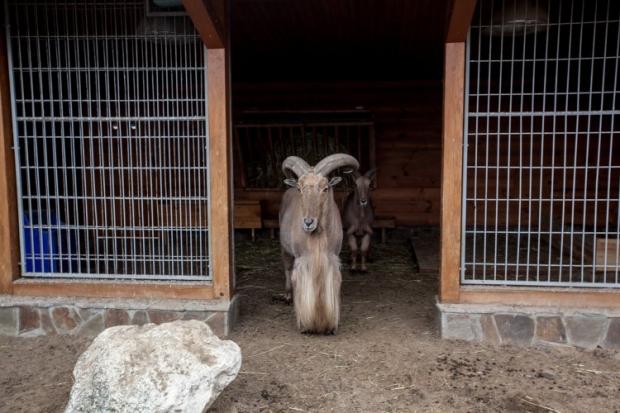 Київський зоопарк бере шефство над тваринами у Межигір'ї