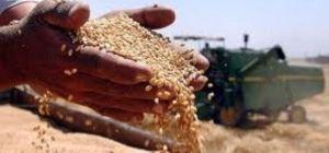 Сможет ли Кабмин победить аграрное лобби