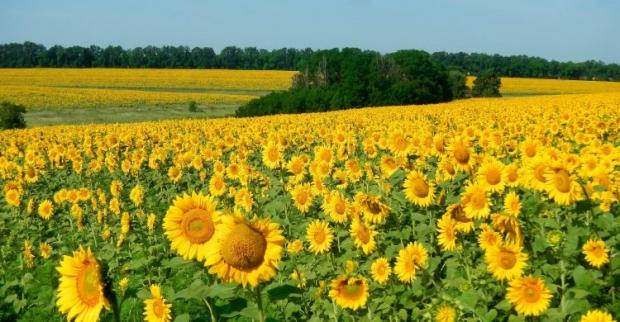 Экспортный потенциал аграриев растет / Фото УНИАН