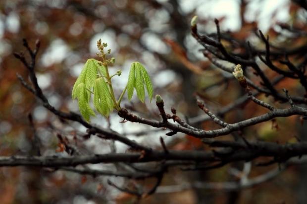 У Київ прийшла весна