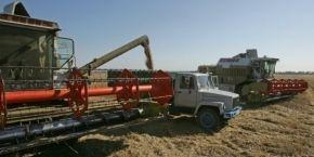 USDA improves grain yield forecast for Ukraine