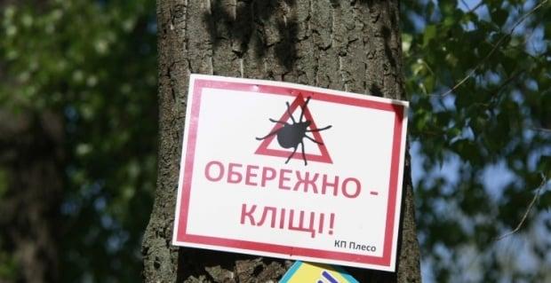 клещ клещи / Фото: УНИАН