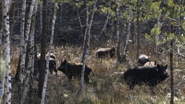В Сухолучье и еще трех охотничьих резиденциях надо создать Национальные парки