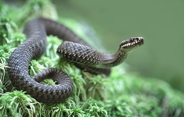 В Житомирской области мужчина из-за укуса змеи попал в реанимацию