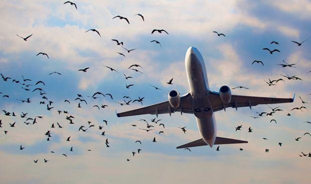 Аэропорты Днепропетровска и Харькова возобновили работу \ cryptozoo.ru