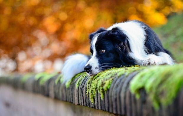 В Украине началась настоящая осень / Petr Chudoba / flickr.com