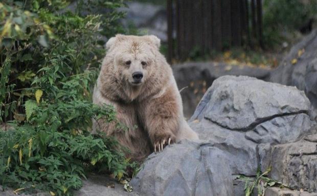 Зоопарк изменит график работы