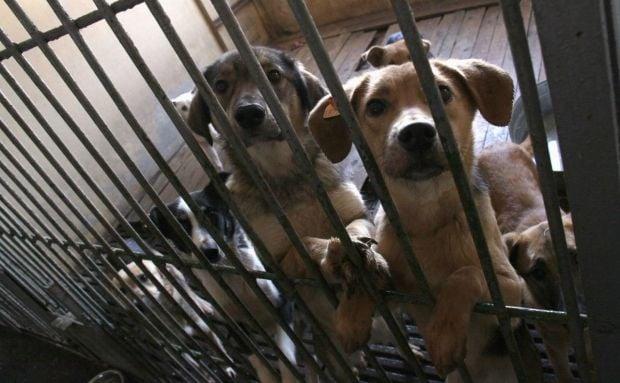 приют для животных, собаки / Фото Екатерины Корниенко