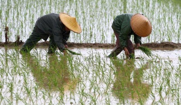 Фермеры прикинулись военными / pixgood.com