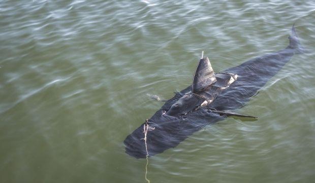 На египетском курорте от нападения акулы погиб немецкий турист \ navy.mil
