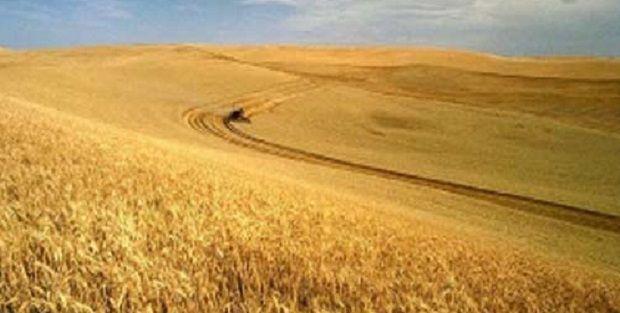 В этом году аграрии столкнулись с дефицитом оборотных средств, что может аукнуться сокращением урожая / agrodovidka.info