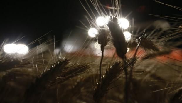 Украина в 2015 году может собрать 60 млн тонн зерновых / Фото УНИАН