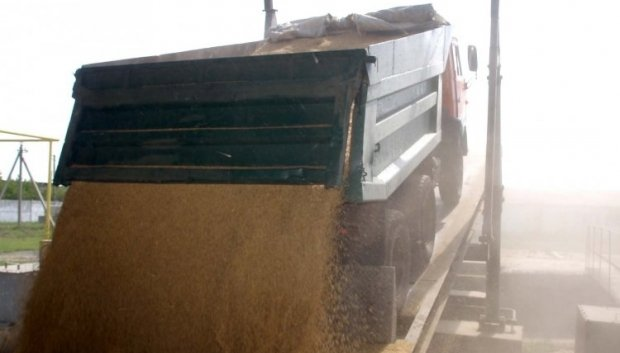 Экспорт зерна из Украины в этом маркетинговом году сократится / Фото УНИАН