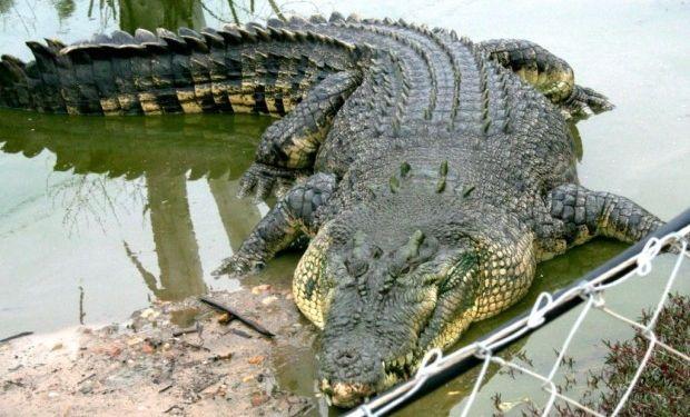В Бангладеш погиб священный крокодил/ ianimal.ru