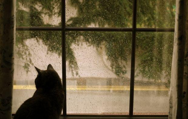 На большей части Украины сегодня будет лить дождь