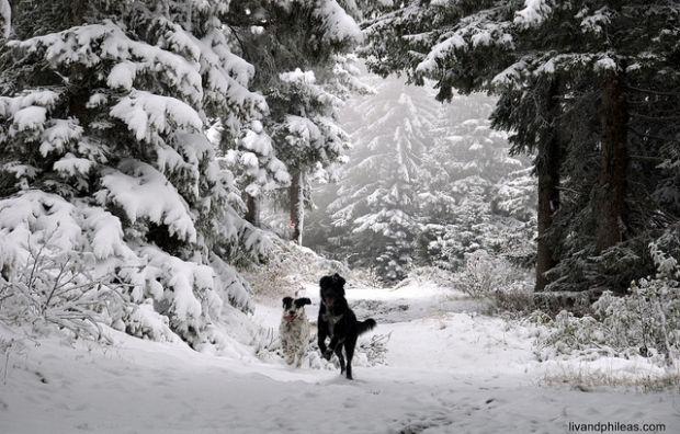 Цими днями в Карпатах можливий мокрий сніг