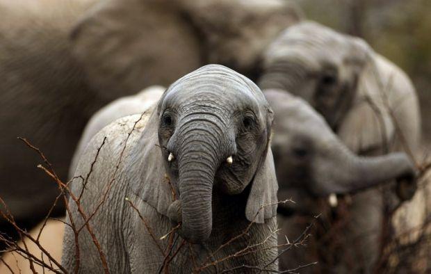 В Таиланде пчелы начали охранять рисовые поля от диких слонов