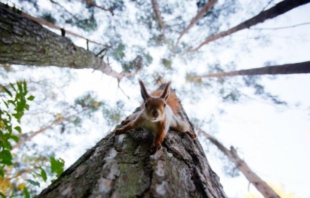 На Львовщине для усиления борьбы с незаконной вырубкой леса введут электронный учет древесины