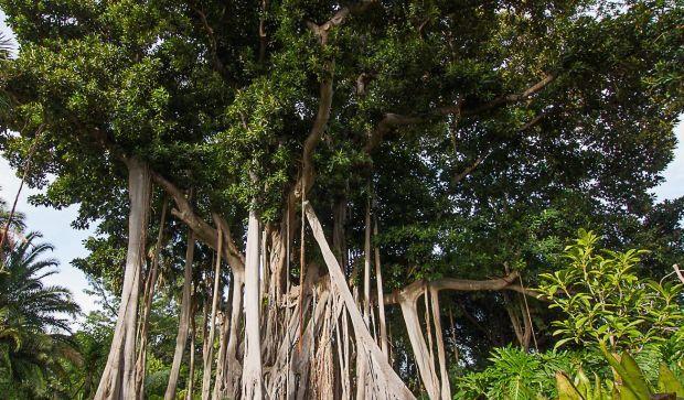 засев каучуковыми деревьями обширных территорий поставит под угрозу жизнь многих животных / za7gorami.ru