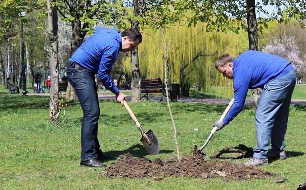 Работники компании не только убрали мусор, но и посадили деревья / «Надра Украины»