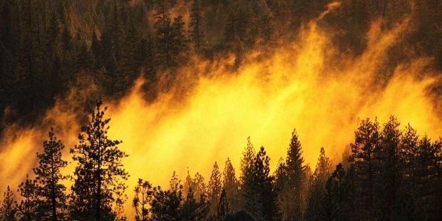 Площадь лесных пожаров в Бурятии составляет 7 тысяч гектаров / popsci.com