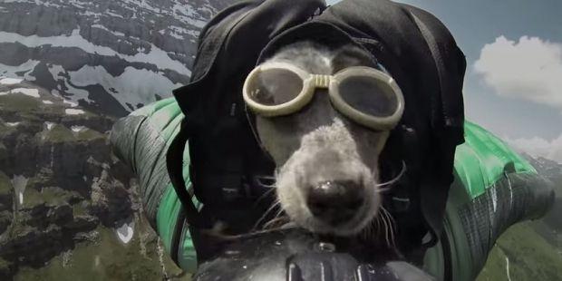 Пес Поттера іноді стрибав разом з ним / кадр з відео