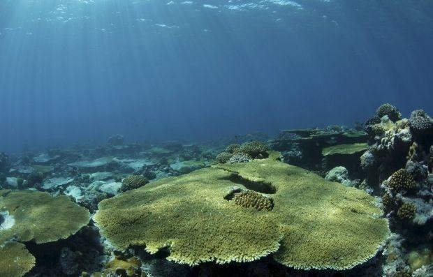 Неизвестные формы жизни обнаружили надне Тихого океана