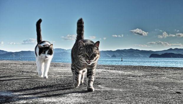 Ученые установили взаимосвязь окраса кошки и ее агрессивности