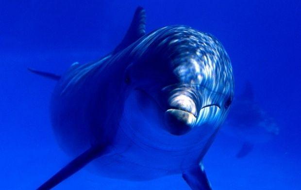 Дельфин / staffstyle.ru