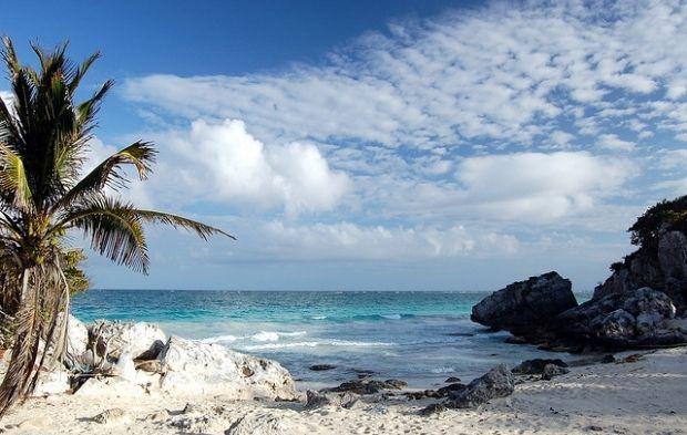 На Карибских островах увеличивается количество опасных водорослей / flickr.com/photos/mindaugasdanys